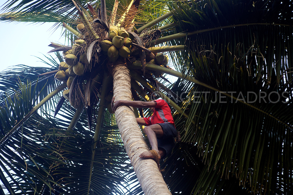 Every motning this man climbs into his coconut trees to collect coconuts for his Juicebar.<br />