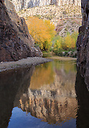 Fall colors in a narrow section of Aravaipa Canyon.