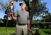 BEST1 Jef Norton, with Miguel, his Macaw, poses for a portrait at his home in Longmont on Thursday.<br /> Matthew Jonas/Staff Photographer June 2, 2016