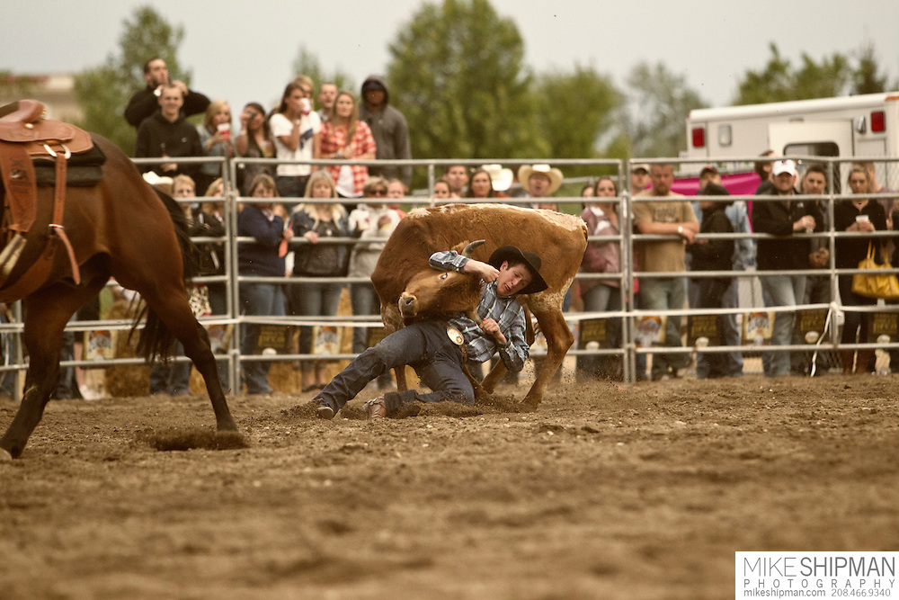 Steer Wrestling, Eagle Rodeo, Eagle, Idaho, USA