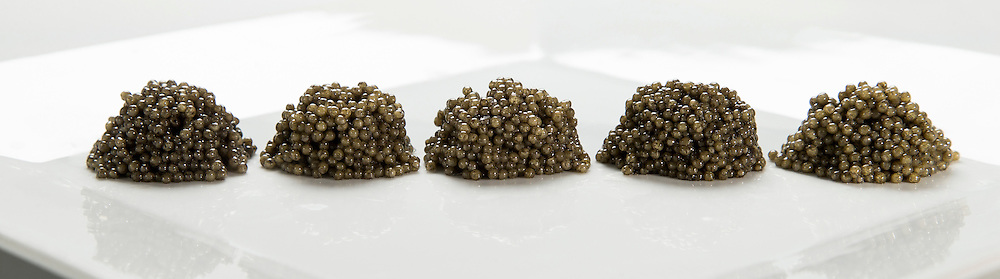 4/21/15 10:35:18 AM -- Technical comparison between samples 1, 7, 10, 12, 3 (left to right). Paddlefish Caviar for the Oklahoma Department of Wildlife Conservation. <br /> <br /> Photo by Shane Bevel