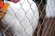 December 2009 Adoption Intake