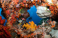 A Diver Peeks through a soft coral encrusted hole in the reef.<br /> <br /> shot in Indonesia