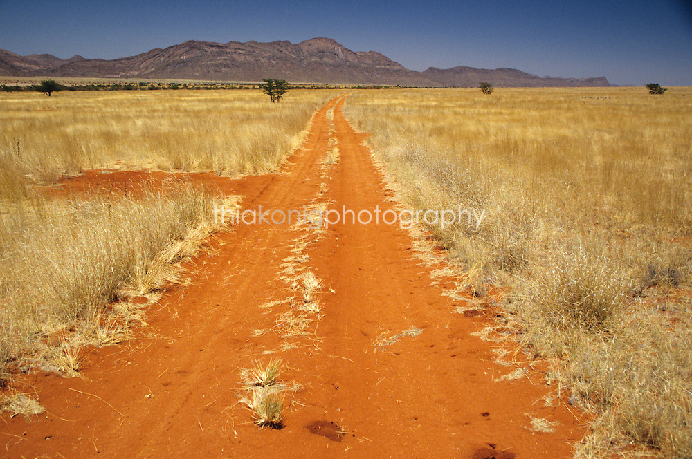 Red dirt road in Northern Namibia takes you through the fairy circles to Angola.