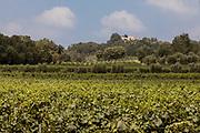 ITALY, Franciacorta area, Calino
