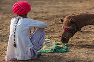 Camel trader with his camel at the Pushkar Camel Fair, Rajasthan, India