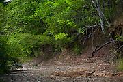 Januaria, 22 de marco de 2009..A fazenda Agroecologica Soma, se intitula uma fazenda produtora de agua. Localiza no municipio de Januaria, a 250 km de Montes Claros, usa a tecnica de Barraginhas ou Bacias de Captacao de Agua de Chuva para recuperar os lencois freaticos e consequentemente os rios da regiao. Em 2005, foram construidas mais de 300 barraginhas na regiao, e acredita-se que o volume de agua dos lencois freaticos cresceu, inclusive com a recuperacao de um rio que corta a propriedade...Na foto, detalhe de um corrego seco na regiao da fazenda...FOTO: BRUNO MAGALHAES / AGENCIA NITRO