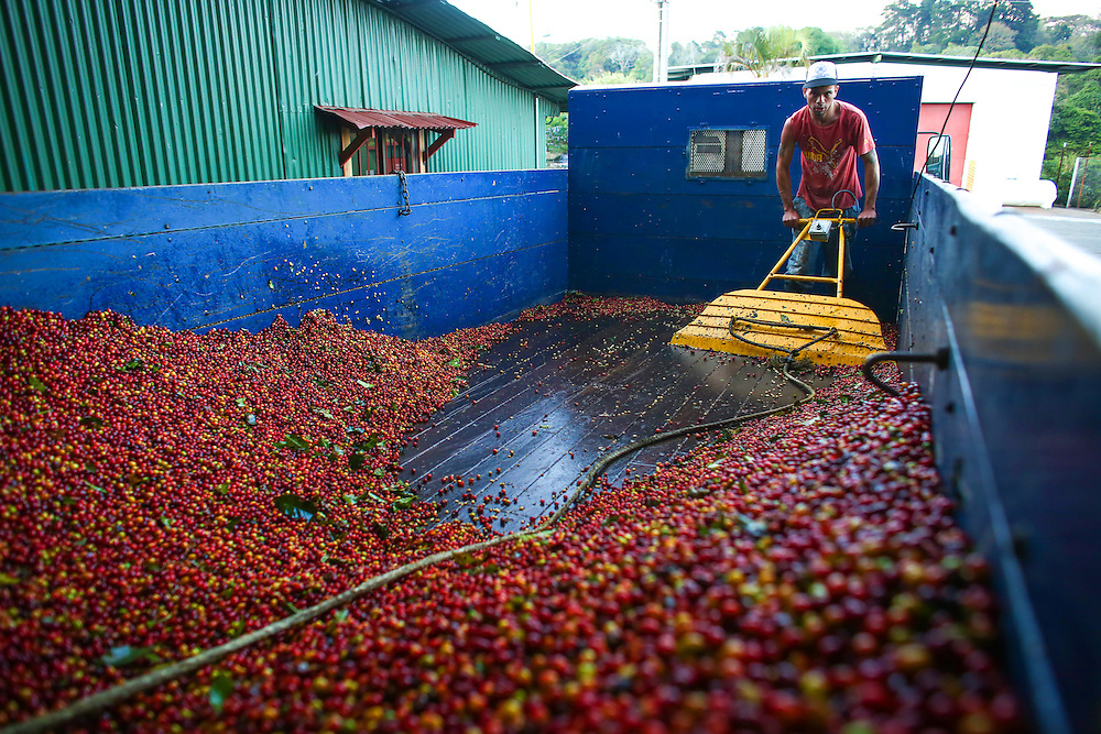 Coffee is unloaded at Bella Vista coffee farm during the 2016 Starbucks Origin Experience for Partners. Photographed in January 2016. (Joshua Trujillo, Starbucks)<br /> <br /> ***model released***