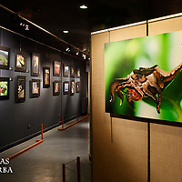 Exposition Trésors d'Amazonie