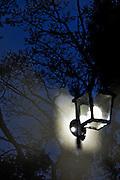 Ilustración y Grafismo. Luces y Sombras. Nocturno. Noche. Arbol de invierno. Farol. Farola. Reflejos. 27-09-2009. Julio E. Foster©
