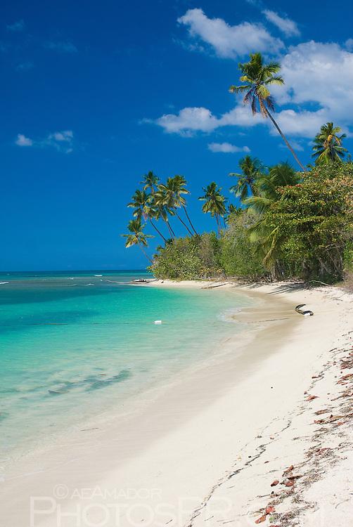 Paradisiacal tropical beach scene