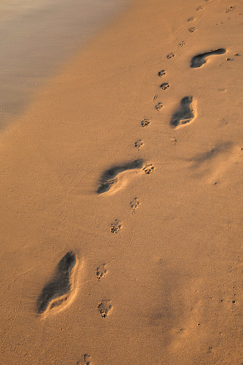Human footprints and dog paw prints in the sand of beach on Koh Kood, Thailand
