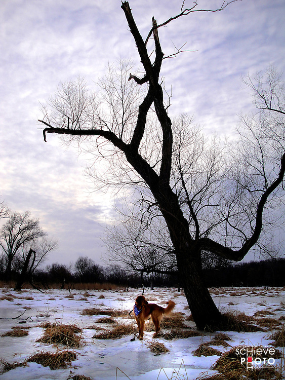 Dog poses by large bare tree in winter.