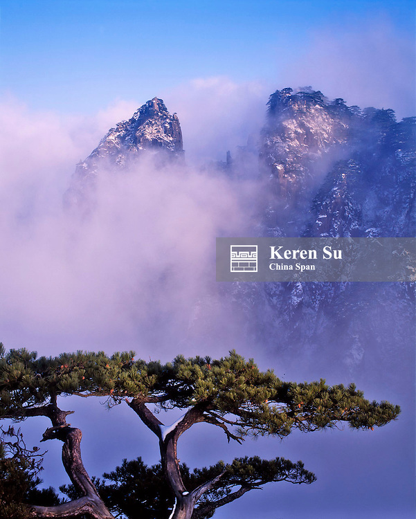 Pine tree with mountain peaks covered in snow in mist, Mt. Huangshan (Yellow Mountain), Anhui Province, China