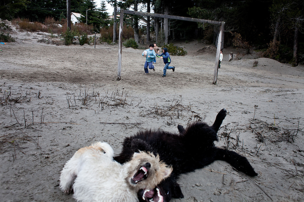 Local dogs and kids play over now ash covered fields In Villa La Angostura, Argentina on August 7th, 2011. Millions of tons of volcanic ash fell, creating a layer of nearly 60cm to cover this town of population nearly 13 thousand.