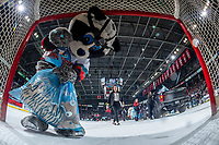 KELOWNA, BC - NOVEMBER 30: Rocky Raccoon the mascot of the Kelowna Rockets poses in front of the net cam during an intermission at the Kelowna Rockets against the Prince George Cougars at Prospera Place on November 30, 2019 in Kelowna, Canada. (Photo by Marissa Baecker/Shoot the Breeze)