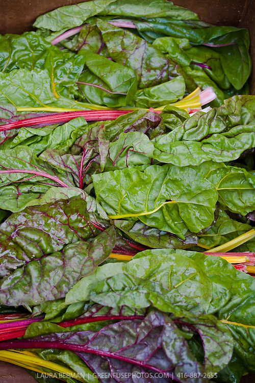 Bunches of Bright Lights chard  at a farmers market