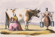 Mlikmaid milking cows in a field while her colleague carries two full pails of milk slung on a yoke back to the dairy  : From 'Graphic Illustrations of Animals and Their Utility to Man', London, c1850.