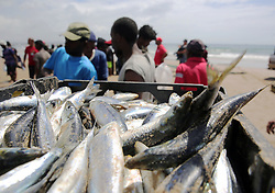 South Africa - Durban - 29 October 2019 - There's been a frenzy of sardine netting off Durban's Ushaka pier on Tuesday due to a late run of the popular silvery fish.<br /> Picture: Motshwari Mofokeng/African News Agency (ANA)