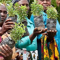 Ladies of the 7 Sisters Women's Group show saplings that they have raised for planting in Machakos County, Kenya. Under the new constitution, the Kenyan government is responsible for ensuring that 10% of all land is covered in forests.<br /> Photo by Ellie Van Houtte