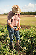Jim Myers breeds organic seeds for farmers at Oregon State University.
