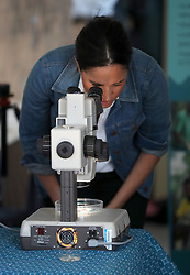 The Duchess of Sussex looks through a microscope during a visit to Waves for Change at Monwabisi Beach in Cape Town, on day two of the royal tour of Africa.