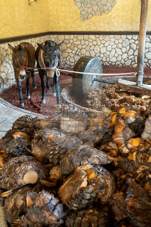 An ancient donkey-pulled tahona or stone wheel mill crushes blue agave fibers at the Casa Siete Leguas, El Centenario tequila distillery in Atotonilco de Alto, Jalisco, Mexico. The Seven Leagues tequila distillery is one of the oldest family owned distilleries and produces handcrafted tequila using traditional methods.