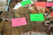 Fishmonger display of varieties of fish on ice table