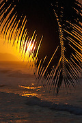 Palm tree silhouetted against the setting sun on Oahu's north shore, Hawaii