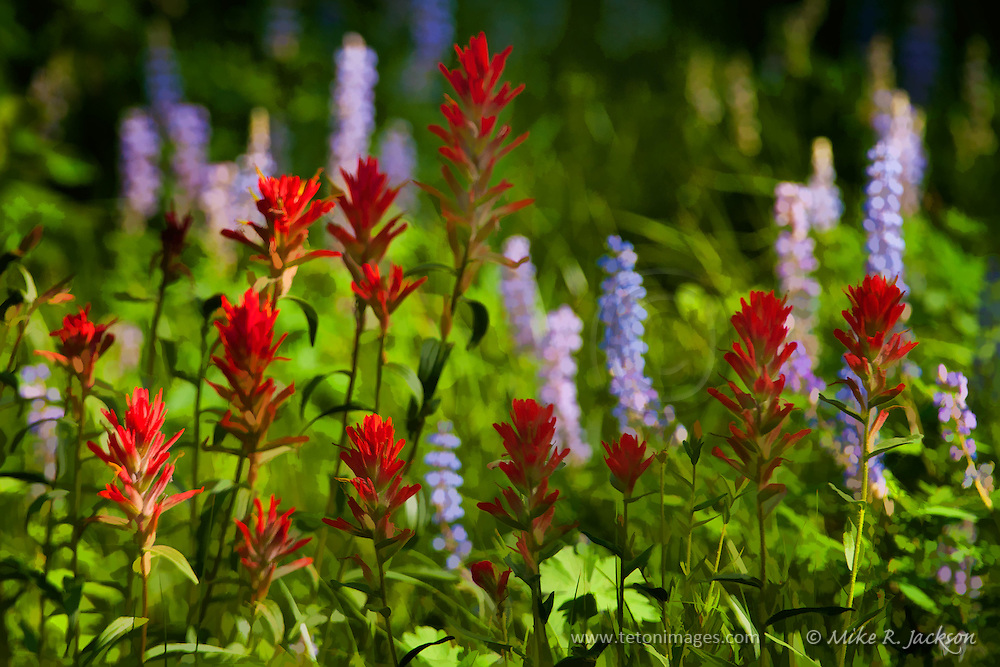 A watercolor style image of blooming Artist's Paintbrush and Purple Lupines in Grand Teton National Park.
