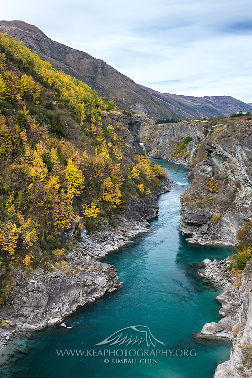Autumn foliage along the banks of the Kawarua River, Queenstown