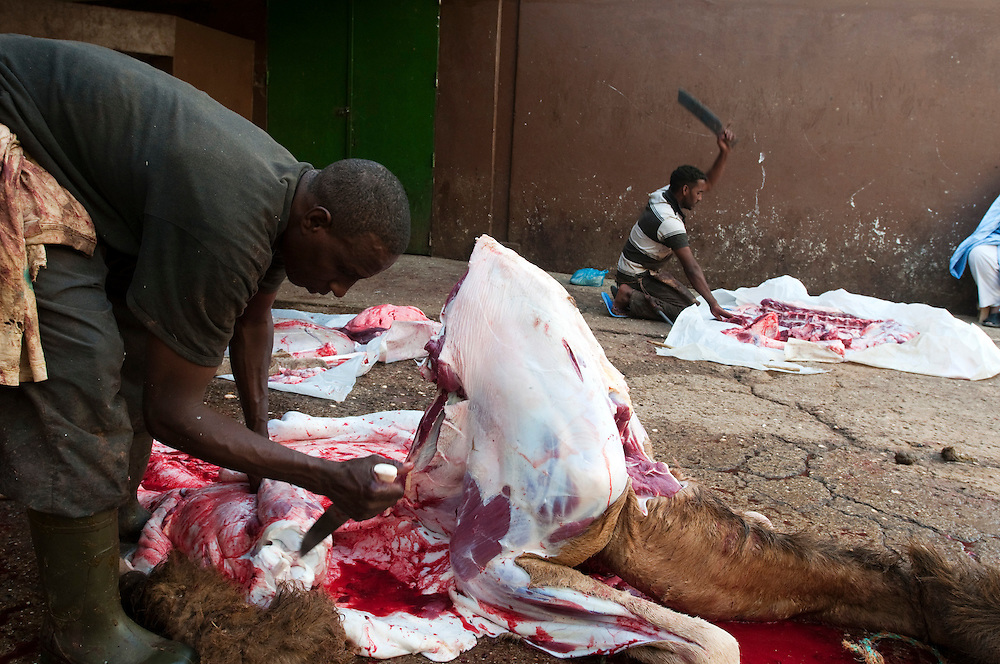 A camel being butchered for two private clients at the central abattoir in the country's capital..Nouakchott, Mauritania. 14/03/2011..Photo © J.B. Russell