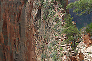 Hikers make their way across a narrow fin of sandstone on the Angel's Landing trail in Zion National Park, Utah.