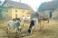 Nepal - Region du Teraï - Village  Tharu