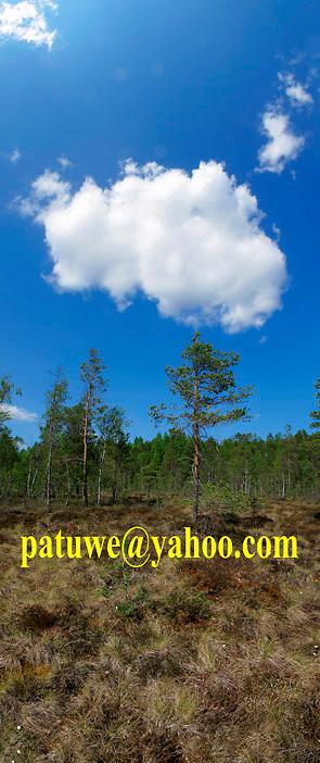 Scandinavia Finland Puurijärvi and Isosuo mire national park, nature reserve, bird sanctuary