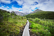 A boardwalk pathway leads straight into the mountains on the Savage Alpine Trail in Denali National Park, Alaska.