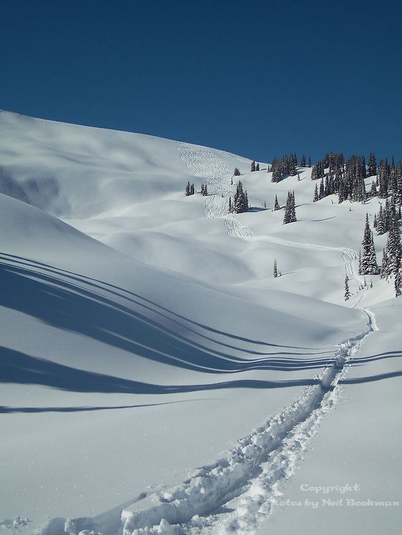 Fresh Tracks on a beautiful powder day in the Monashee Mountains.