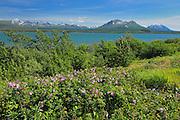 Deasadeash Lake<br /> near Haines Junction<br /> Yukon<br /> Canada