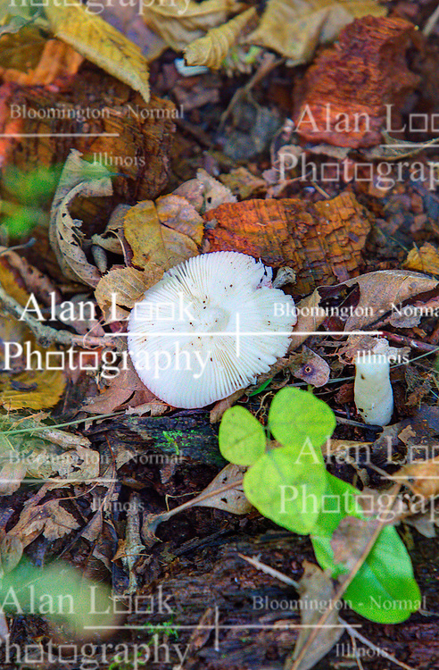 09 October 2013:   Mushrooms can be spotted along hiking Trail #2.  Brown County State Park, Brown County Indiana.<br /> <br /> This image was produced in part utilizing High Dynamic Range (HDR) processes.  It should not be used editorially without being listed as an illustration or with a disclaimer.  It may or may not be an accurate representation of the scene as originally photographed and the finished image is the creation of the photographer. <br /> <br /> This image was produced in part utilizing High Dynamic Range (HDR) processes.  It should not be used editorially without being listed as an illustration or with a disclaimer.  It may or may not be an accurate representation of the scene as originally photographed and the finished image is the creation of the photographer.