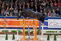 179, Macho Man<br /> KWPN hengstenkeuring - 's Hertogenbosch 2020<br /> © Hippo Foto - Dirk Caremans<br />  29/01/2020