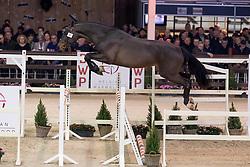 067, Qornet vd Bisschop<br /> Hengstenkeuring BWP - Lier 2019<br /> © Hippo Foto - Dirk Caremans<br /> 18/01/2019