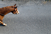 horse walking on asphalt