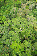 Rainforest Canopy<br /> Yasuni National Park, Amazon Rainforest<br /> ECUADOR. South America