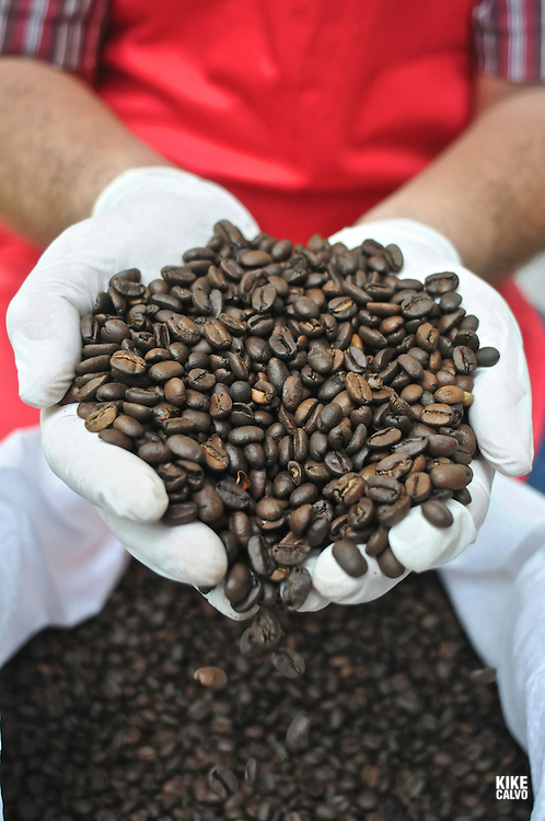 Coffee beans. Panamanian agroindustrial coffee factory ?Café Diamante S.A.?