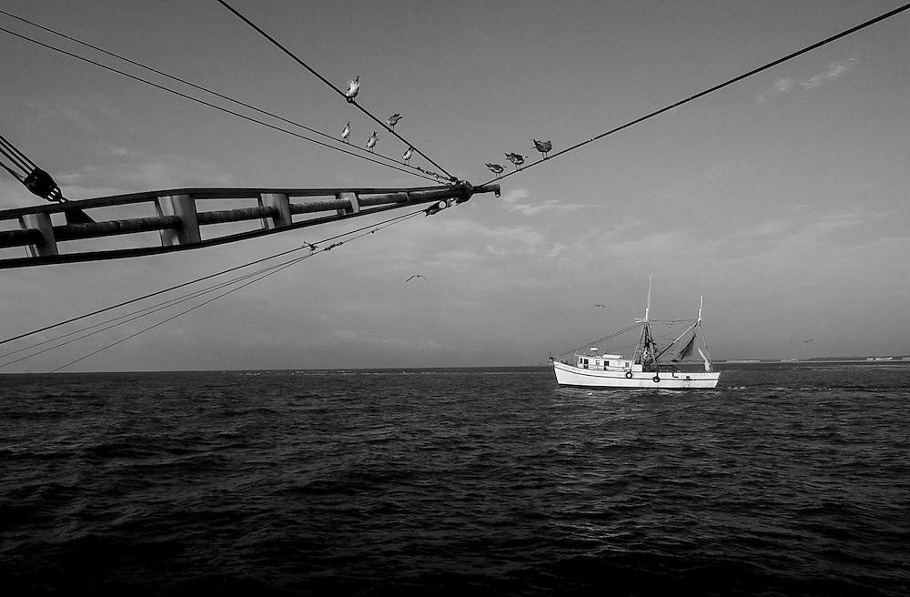 Two shrimp boats pass each other off of the coast of Hilton Head Island. Shrimp prices are falling as more farm-raised shrimp are imported into the United States. As a result, domestic shrimpers must catch a few hundred pounds of shrimp just to cover their fuel costs.