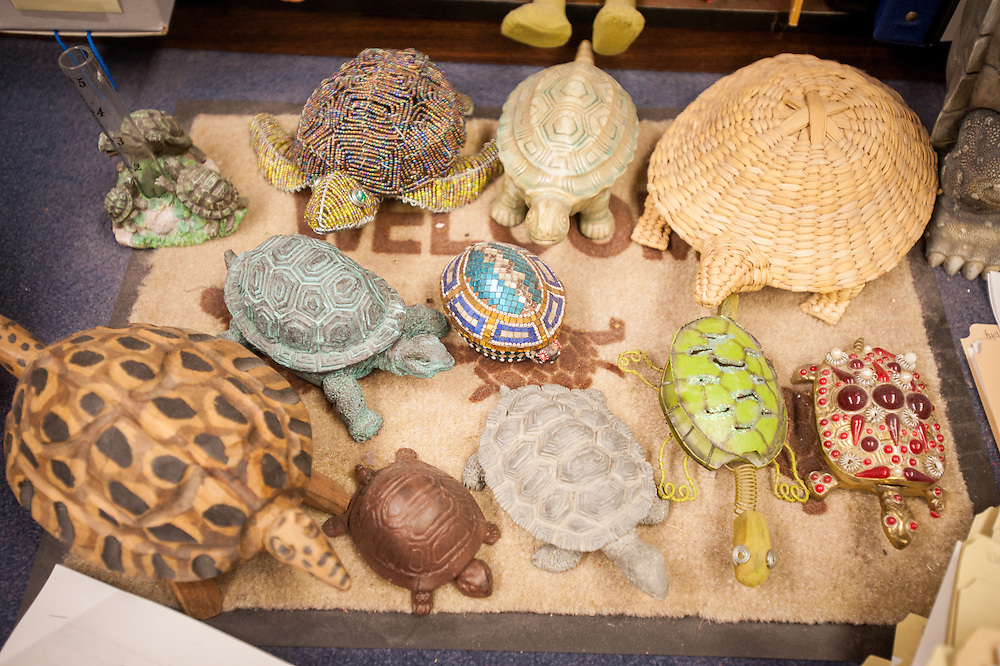 Display of turtle memoriablia at the University of Maryland in College Park, Maryland