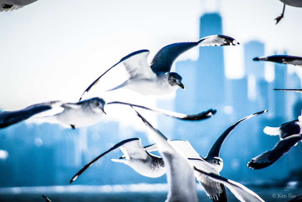 The birds in Montrose Point in Chicago's far northside along the lake front.  Montrose Point is famous for being a stopping point along the migratory bird route.  Over 300 species of birds have been recorded at the point over the years.