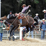 Jeremy Dillon, from Nelson in action during the Open Saddle Bronc competition at the Southland Rodeo, Invercargill,  New Zealand. 29th January 2012