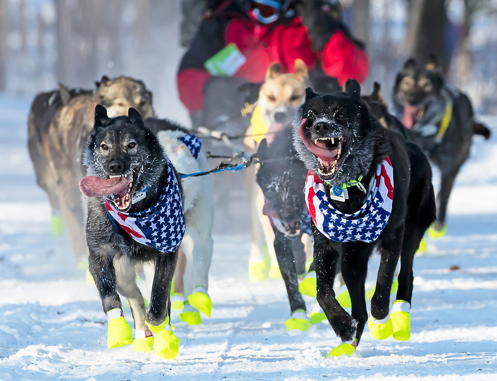 Alaska. Dog team of Joe Carson running through trails of Anchorage during the 2017 Iditarod Ceremonial start, Anchorage.