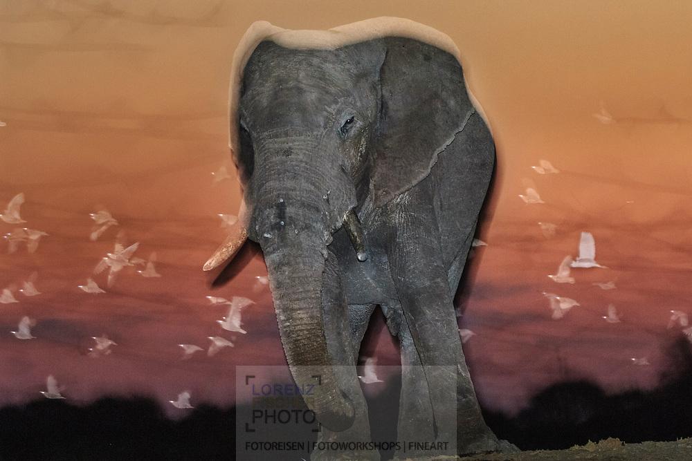 Impressionen  mit Elefanten-Bullen aus der Region Savuti im Chobe Nationalpark während der Dämmerung.